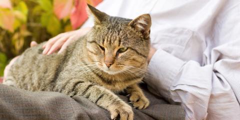 3 Veterinary Care Tips for Senior Pets, Honolulu, Hawaii