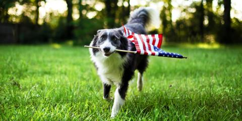 3 Tips for Keeping Your Pet Safe This Fourth of July, Sycamore, Ohio