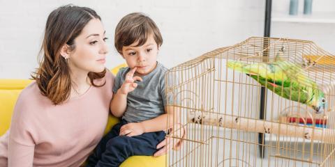 5 Contagious Diseases in Pet Birds, Sycamore, Ohio