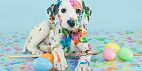 3 Tips to Keep Your Pets Safe This Easter, Sycamore, Ohio