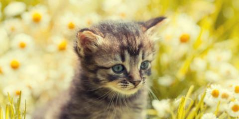 Can Pets Get Allergies in the Spring?, Clarksville, Maryland
