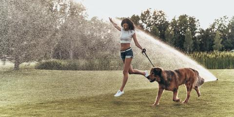 5 Safety Tips for Your Pets During Summer, Dothan, Alabama