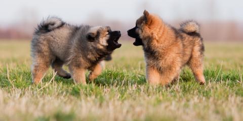 3 Veterinary Care Tips for Puppies, Honolulu, Hawaii