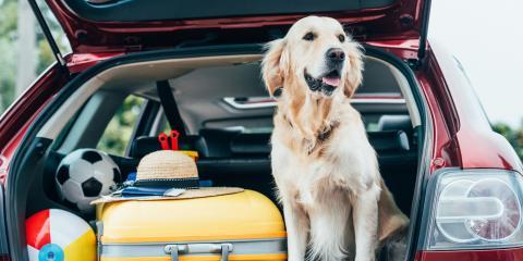 3 Ways to Keep Your Dog Healthy, Orange Beach, Alabama