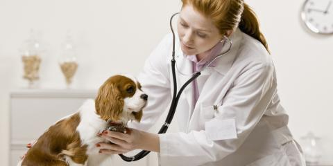 3 Reasons Annual Trips to the Veterinary Clinic Are Important, Lincoln, Nebraska