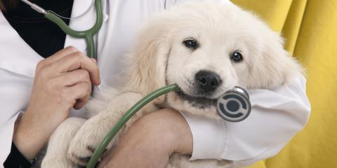 What to Expect at Your Puppy's First Visit to a Veterinary Clinic, Chester, New York