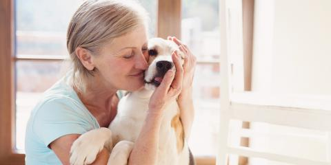 5 Tips to Help Pets With Anxiety, Hilton, New York