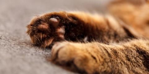 Russellville Veterinary Clinic Shares Whether You Should Declaw Your Cat, Russellville, Arkansas