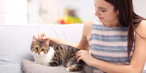 A Guide to Adopting Your First Cat, Russellville, Arkansas