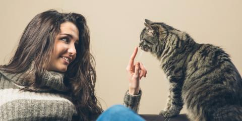 Pet Health 101: Top 4 Signs Your Pet Might Be Sick, Hilton, New York