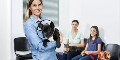 3 Signs You Should Bring Your Pet to a Veterinary Hospital, Waynesboro, Virginia