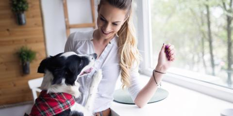 3 Veterinary Tips to Keep Your Pet Healthy, Hilo, Hawaii
