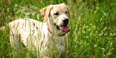 Veterinary Experts Spotlight Allergy & Asthma Awareness Month, Cabot, Arkansas