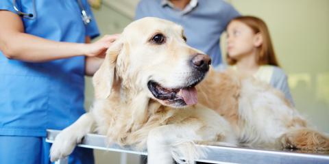 When You Should Take Your Pet to a Vet Hospital, Cincinnati, Ohio