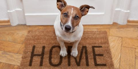 5 Essential Tips for At-Home Pet Care, Enterprise, Alabama