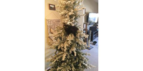 5 Veterinarian-Approved Safety Tips for Pets During the Holidays, Lincoln, Nebraska