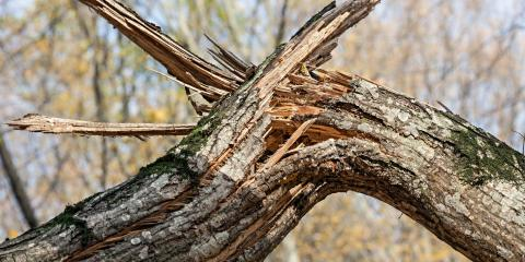 3 Steps to Take When You Have Storm-Damaged Trees, West Hartford, Connecticut
