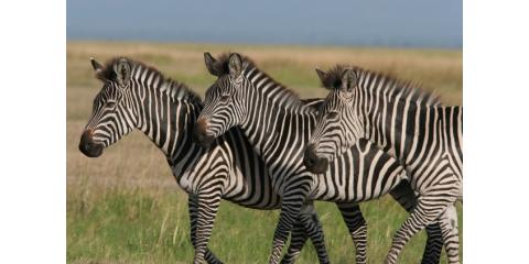 One, Two, Free!  An Incredible African Safari Deal! , Manhattan, New York