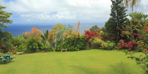 Top 3 Healthy Grass Tips for Hawaii Residents, Wahiawa, Hawaii