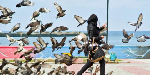 What Is Bird Control & What Are the Benefits? , Wahiawa, Hawaii