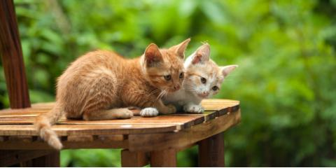 Why Spaying or Neutering Your Pet Is Essential, Wahiawa, Hawaii