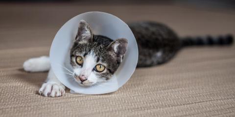 Do's & Don'ts for Pet Surgery Recovery, Wahiawa, Hawaii