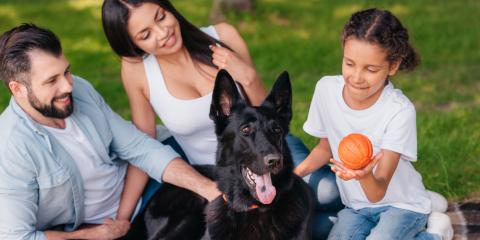 3 Veterinarian Tips for First-Time Pet Owners , Wahiawa, Hawaii