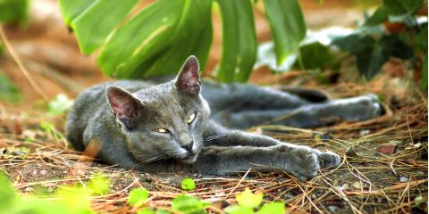 How Spaying Combats the Effects of Feral Cats in Hawaii, Wahiawa, Hawaii