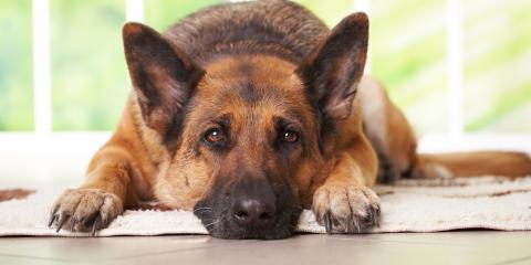 How to Manage Your Dog's Arthritis, Wahiawa, Hawaii