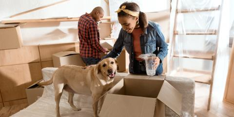 4 Reasons to Schedule Pet Boarding for Moving Day, Wahiawa, Hawaii