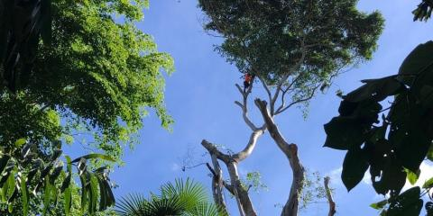 What's a Tree Risk Assessment?, Waialua, Hawaii