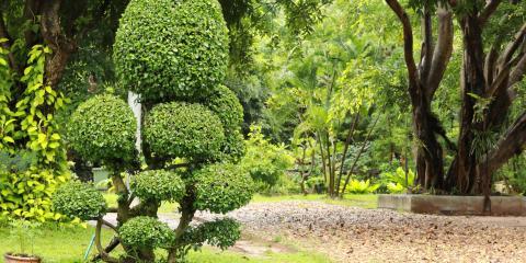 What Is Root Pruning? , Waialua, Hawaii