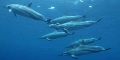 3 Tips for Swimming With Dolphins, Waianae, Hawaii