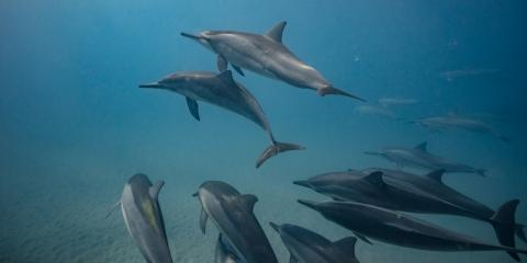 Do Dolphins Make Friends?, Waianae, Hawaii