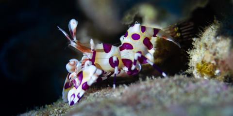 5 Fascinating Invertebrates You Might Find in Hawaii Coral Reefs, Waianae, Hawaii