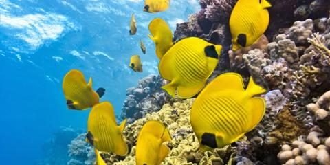 3 Amazing Animals You'll See While Snorkeling in Hawaii, Waianae, Hawaii