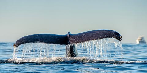 3 Reasons to Go on a Private Whale-Watching Tour, Honolulu, Hawaii