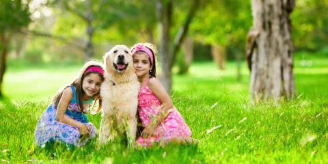 Affordable Pet Clinic Answers 4 FAQs About Seasonal Pest Prevention, Maui County, Hawaii