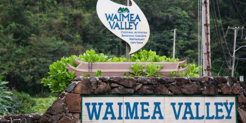 It's All about Dad, Food, and Music in Waimea Valley, Koolauloa, Hawaii