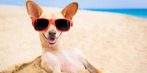 Animal Care Tips: Ensure Your Dog Has a Safe Summer With These 5 Guidelines, Ewa, Hawaii