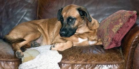Animal Care Experts Explain Destructive Tendencies in Dogs, Ewa, Hawaii