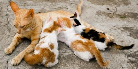 Cat Nutrition From The Animal Care Experts at Waipahu Waikele Pet Hospital, Ewa, Hawaii