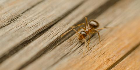 Ant Control Professionals Share 3 Signs You Have an Infestation, Ewa, Hawaii
