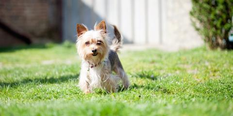 4 Factors When Choosing a Fence Installation for a Dog, ,