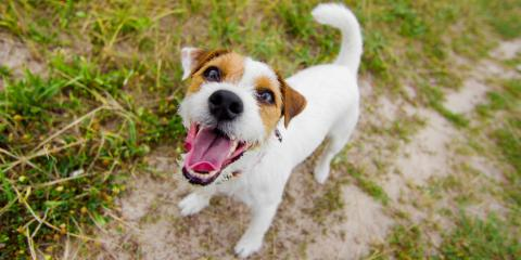 Veterinary Hospital Explains How to Prevent Tapeworms & Keep Your Pet Healthy, Ewa, Hawaii