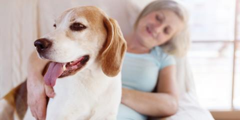 5 Important New Year's Resolutions for Pet Health, Ewa, Hawaii