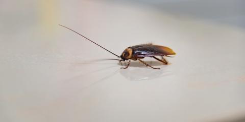 5 Signs You Need Roach Control, Ewa, Hawaii