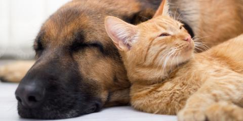 Ask a Veterinarian: How to Help Your Pet in an Emergency, Ewa, Hawaii