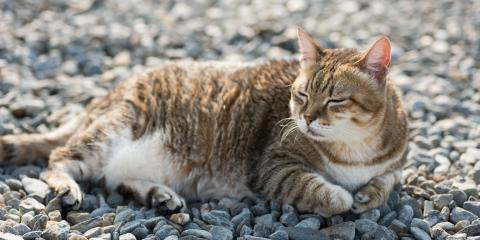 Everything You Should Know About Pet Obesity, Ewa, Hawaii