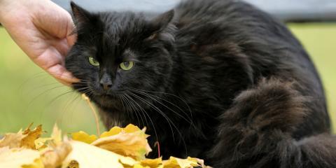 Spread Pet Health Awareness on National Black Cat Day, Ewa, Hawaii